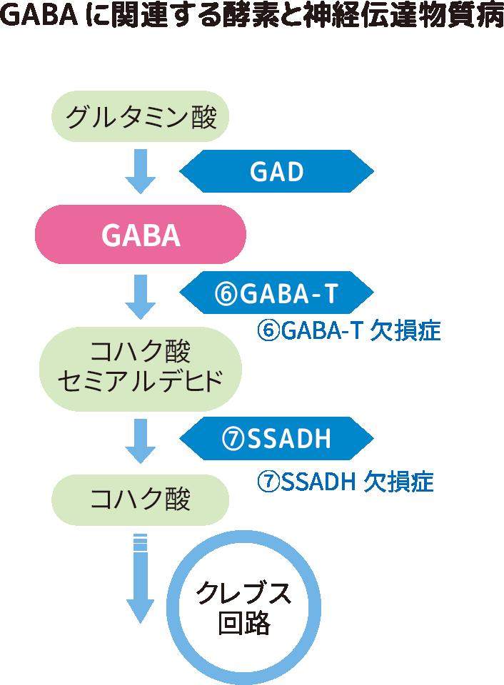GABAに関する酵素と神経伝達物質病